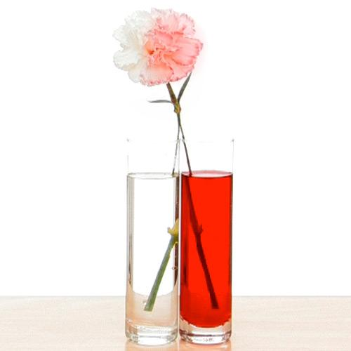 The water from each glass is carried from the stem of the flower to the flower by diffusion turning half of the flower red